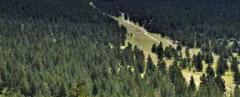 2010-2017年全國森林面積、森林覆蓋率及森林火災次數統計