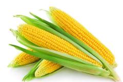 2019年中国玉米现状及发展趋势分析,要不断提高玉米新技术的效率「图」