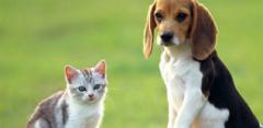 2019年中國寵物行業市場規模、養寵類型與消費情況分析,市場規模突破2000億大關「圖」