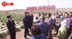 习近平:黄花菜大产业 人民致富好门路