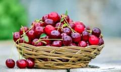 中美樱桃产业市场现状及发展趋势分析,甜樱桃品种是目前发展主要方向「图」