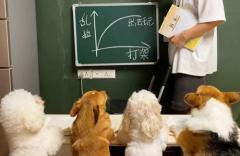 萌宠头部主播跻身网红第一梯队,萌宠短视频催生新经济,2020年中国宠物市场规模达3000亿!「图」