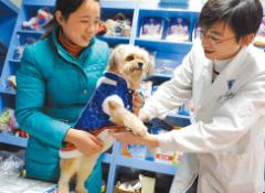 宠物外卖迎来大爆发 宠物经济崛起产业链条日益完善「图」