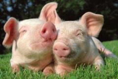 辽宁省生猪产能正在持续恢复,现已恢复到常年九成水平