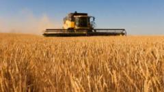 叠加因素导致粮价波动,中国粮食供需并无缺口!