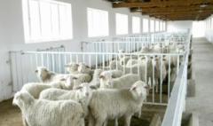 2019年肉羊养殖行业发展现状及趋势分析,区域化程度提高「图」