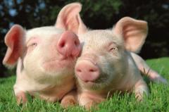 山东省生猪价格连续5周上涨随着生猪出栏量逐步增多,供求关系将进一步稳定