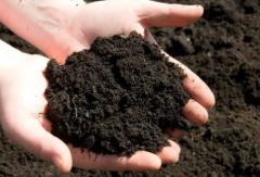 2020年中国堆肥行业市场前景预测及投资战略研究
