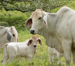 2020年中国畜牧行业发展现状研究,生猪生产恢复较快,牛羊禽产量稳定增长「图」