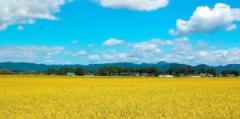 """全面布局乡村振兴: 农业农村现代化""""施工图""""明晰"""