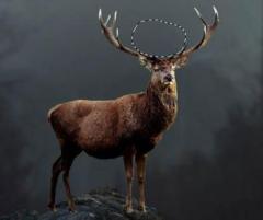 2020年中国鹿业行业发展现状研究,马鹿价格遭遇大幅下跌「图」