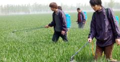 我国农用杀虫剂行业发展现状及出口情况分析,天然产物杀虫剂未来应用空间较大「图」