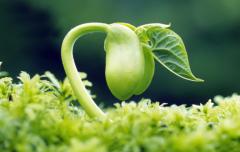 2021中国种子行业市场前景预测及投资战略研究