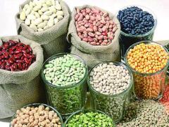 全球食品价格持续上涨,玉米大涨45%,高粱涨82%!未来价格走势如何?「图」