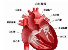 中国心脏瓣膜行业发展现状及趋势分析,外科生物瓣将逐渐进口替代「图」
