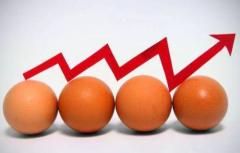 """便宜了半年的蛋价出现反弹进入""""五元档""""未来是否还会出现持续上涨态势?「图」"""