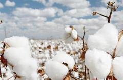 中国短绒棉用途、产量和进出口分析,产量不足以满足国内需求「图」