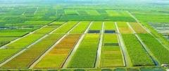 农业农村部:加快研究生猪产能储备政策,促进生猪生产平稳发展
