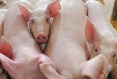 港股IPO 德康集团提交境外上市申请,2020年提供2000万头生猪