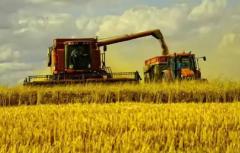 初夏时节农事忙特色产业引领乡村振兴路