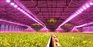 2020年我国植物照明市场发展现状与应用领域分析,植物工厂全面推广有助于农业照明产值快速增长「图」