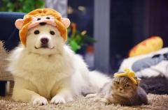"""""""宠物经济""""升温 养狗撸猫进入智能时代:2020年中国人均单只宠物年消费金额6653元 同比增长19.6%「图」"""
