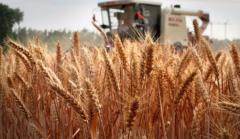 暴雨后的河南农业:花生、玉米受灾面积合计超千万亩!对农产品价格影响多大?