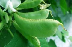 2020年中国扁豆产量、种植面积及进出口分析,扁豆进口逐年增长「图」