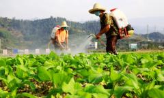踏实走好农业特色产业发展的每一步高质量推动产业振兴