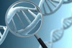中小盘、新三板投资策略报告:胶原蛋白 生物医药材料下一个风口