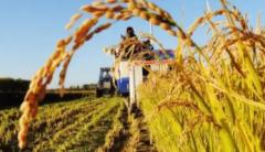 农业农村部:用好农业生产救灾资金,推动金融保险联动