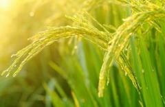 联合国粮农三机构聚焦农业粮食体系转型提高农业粮食体系的包容性和可持续性