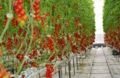 2021年中国农业种植行业发展潜力分析及投资方向研究